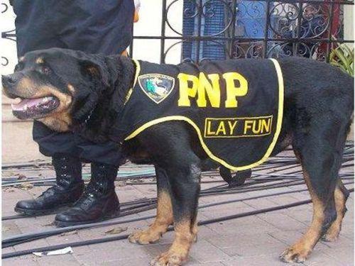 Policia Canina Dio Baja Lay Fun