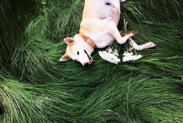 happy-dog-photography-gluta-thailand-1
