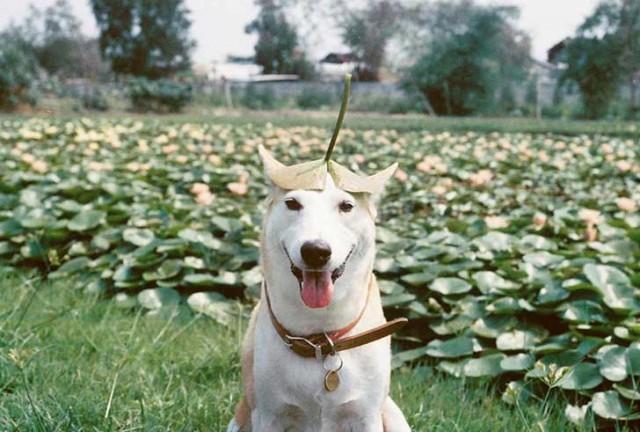 happy-dog-photography-gluta-thailand-18
