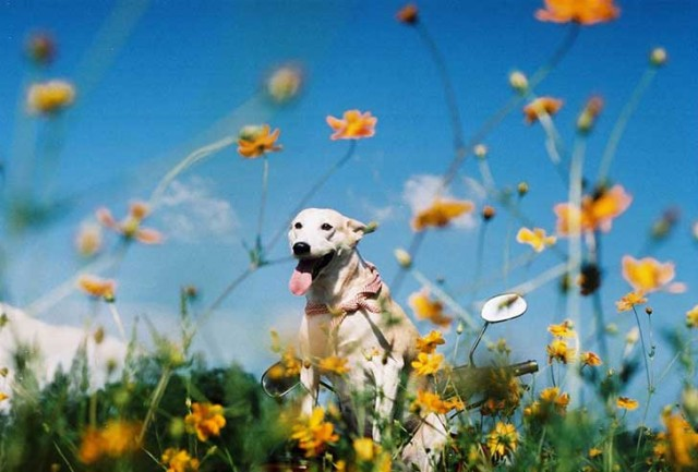 happy-dog-photography-gluta-thailand-4