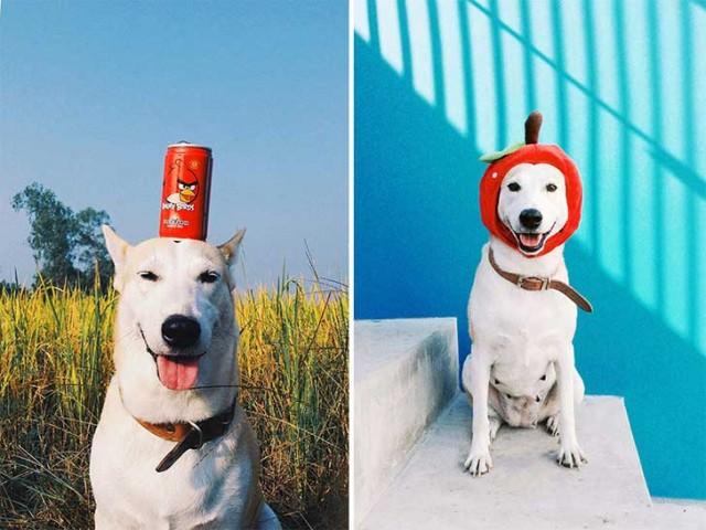 happy-dog-photography-gluta-thailand-5 (1)