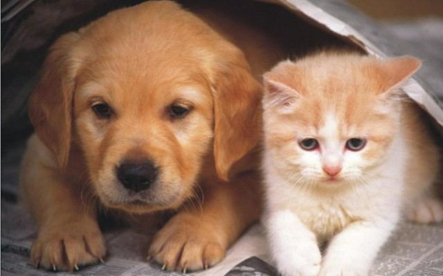 Dog-and-Cat-Wallpaper-teddybear64-16834863-1280-800
