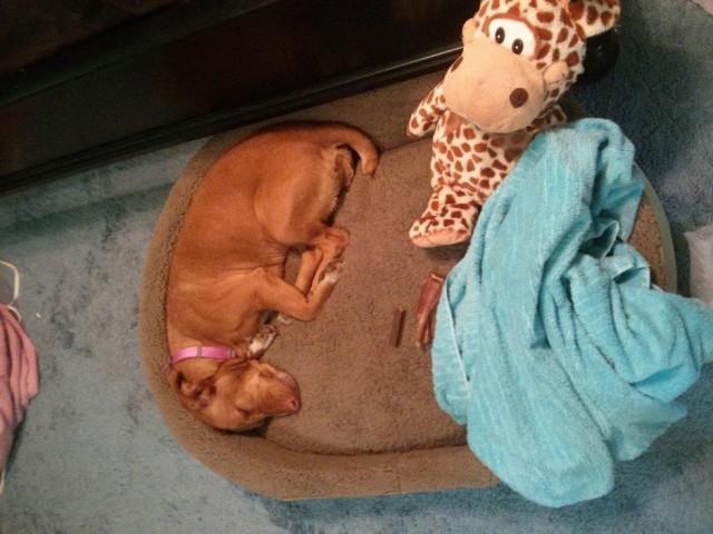 perros-cama-10