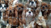 Puppy-Mill
