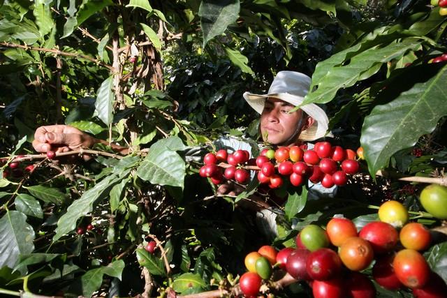 Cafe Amazonas 1